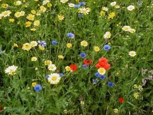 wildflower-meadow-2